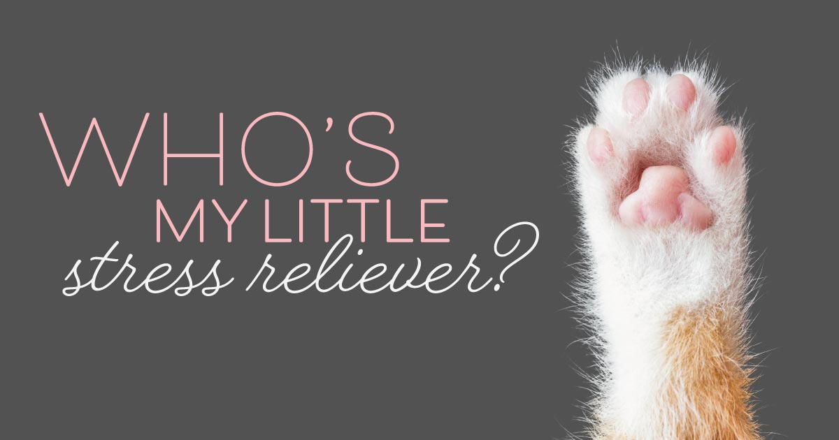 A cat's paw raised in the air. Text reads: Who's my little stress reliever?